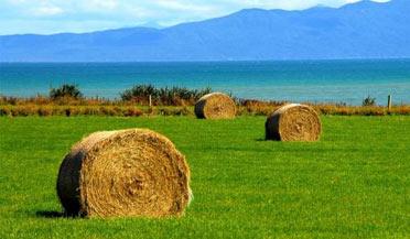 新西兰北岛遭遇25年来最严重的干旱