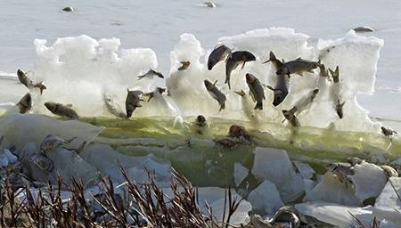 真是太美啦!湖鱼被冰封 空中奇景震撼