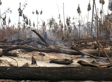 亚马逊雨林火灾后航拍画面