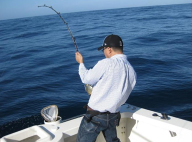 大鱼上钩大白鲨飞身夺食