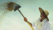 龙洋米业-五常稻花香大米