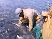 """让鱼儿告诉你,黑龙江的""""三花五罗""""中最贵的是它"""