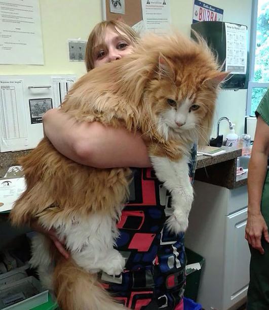 什么猫最大