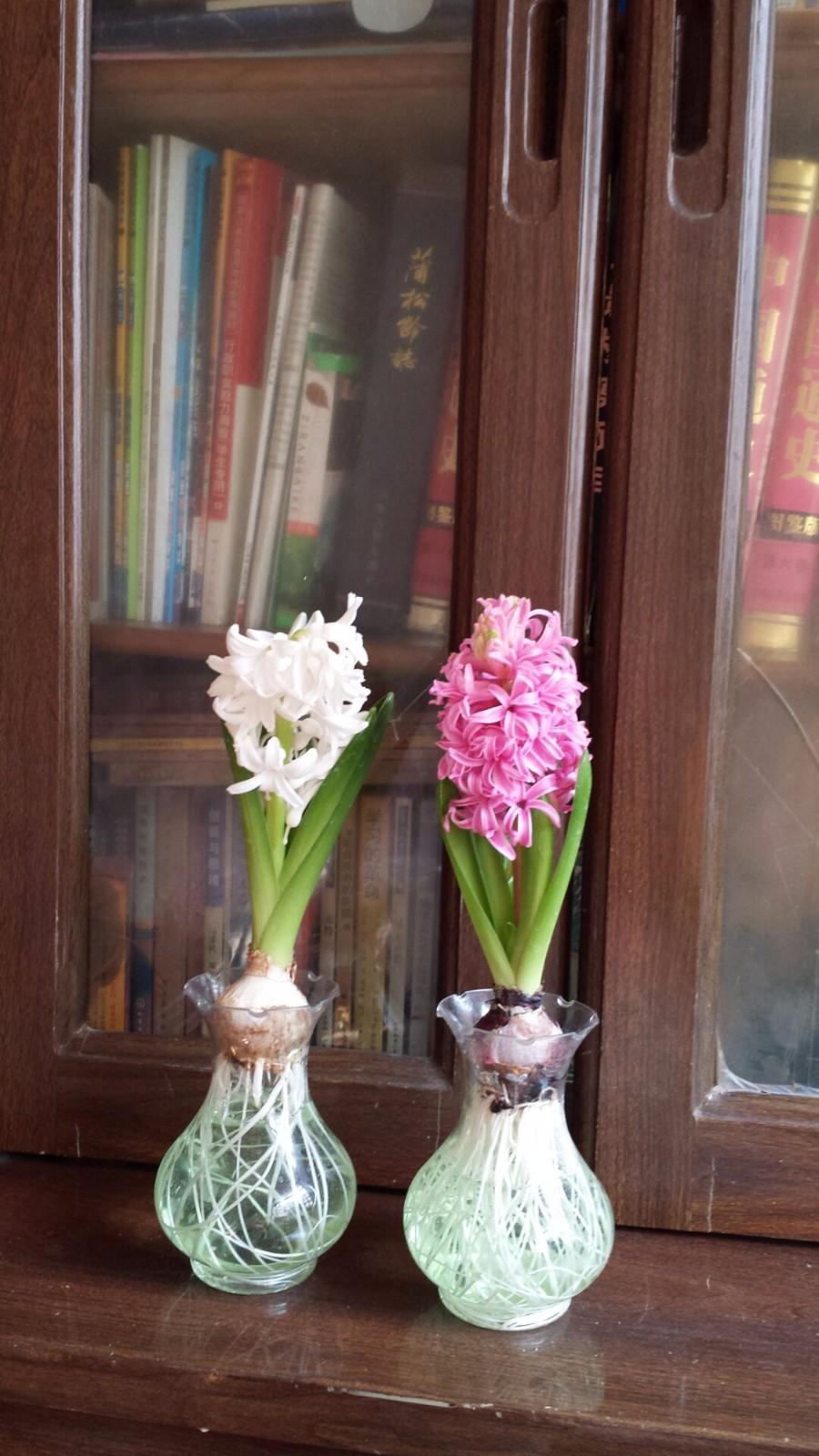 风信子几月开花