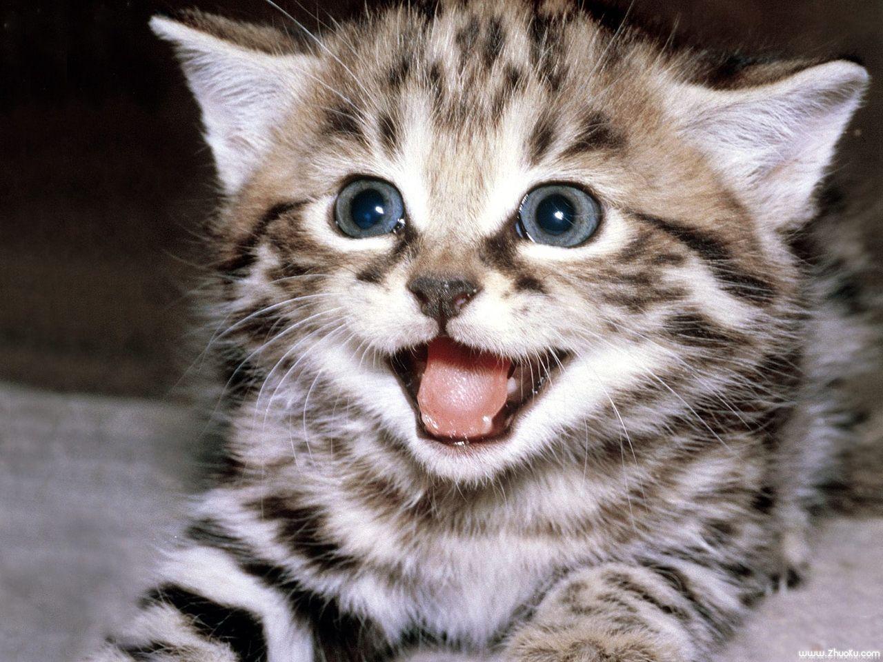 这种猫叫什么猫 价格如何