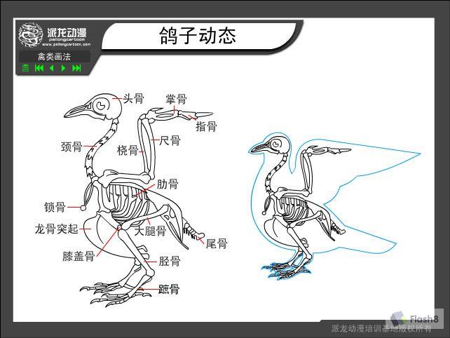 鸭锁骨是鸭子的哪个部位?