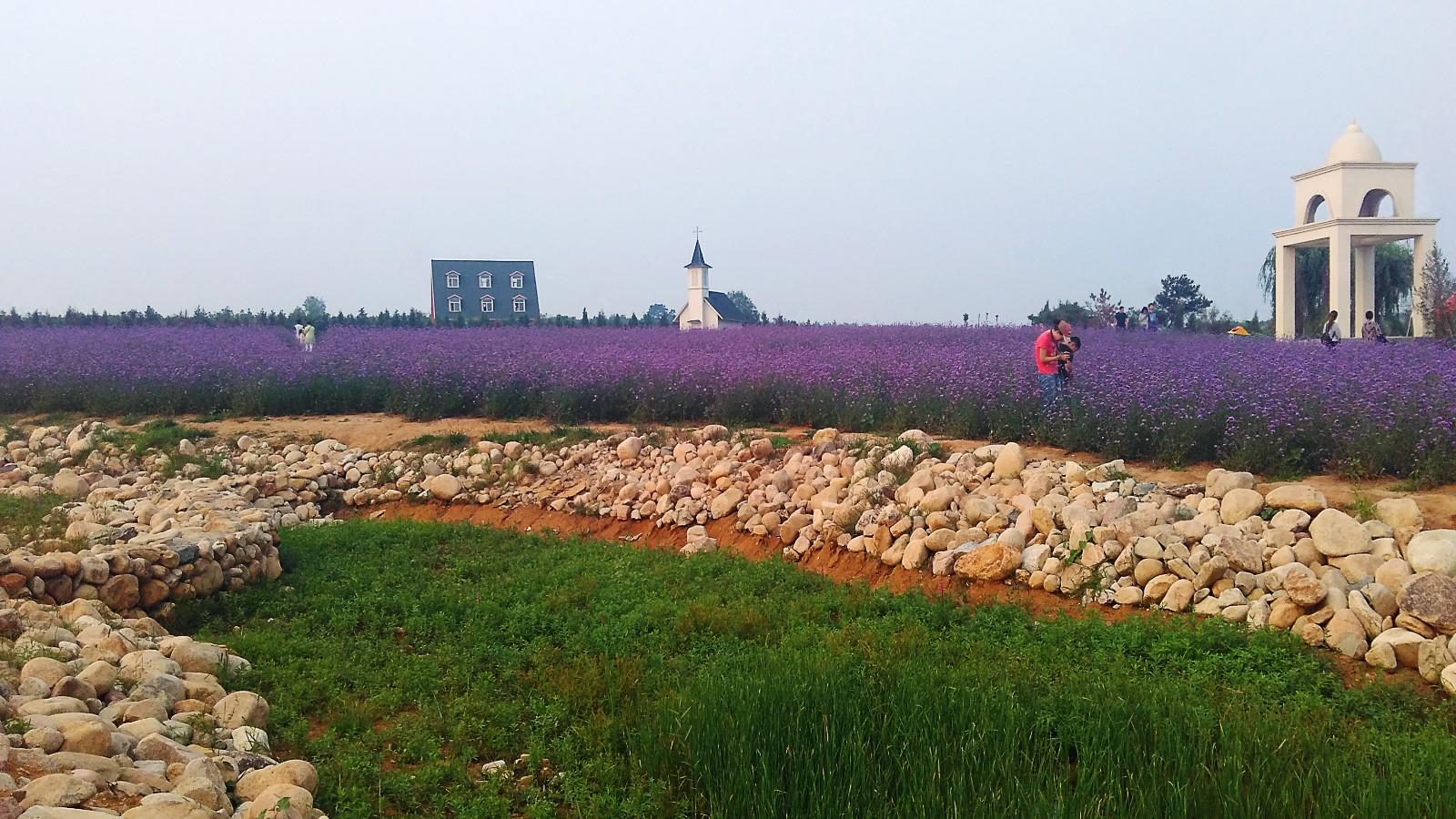 秦皇岛薰衣草基地在哪