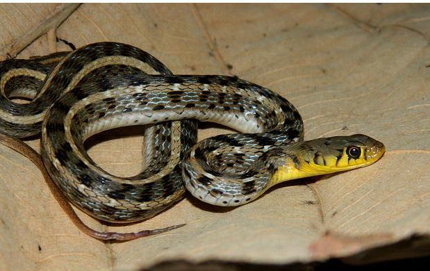 有谁知道这种是什么蛇