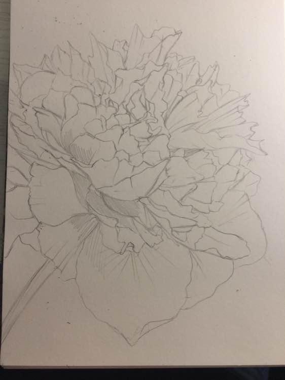牡丹花手绘铅笔铅笔画简单一点儿好看一点儿 手绘牡丹花教程图片