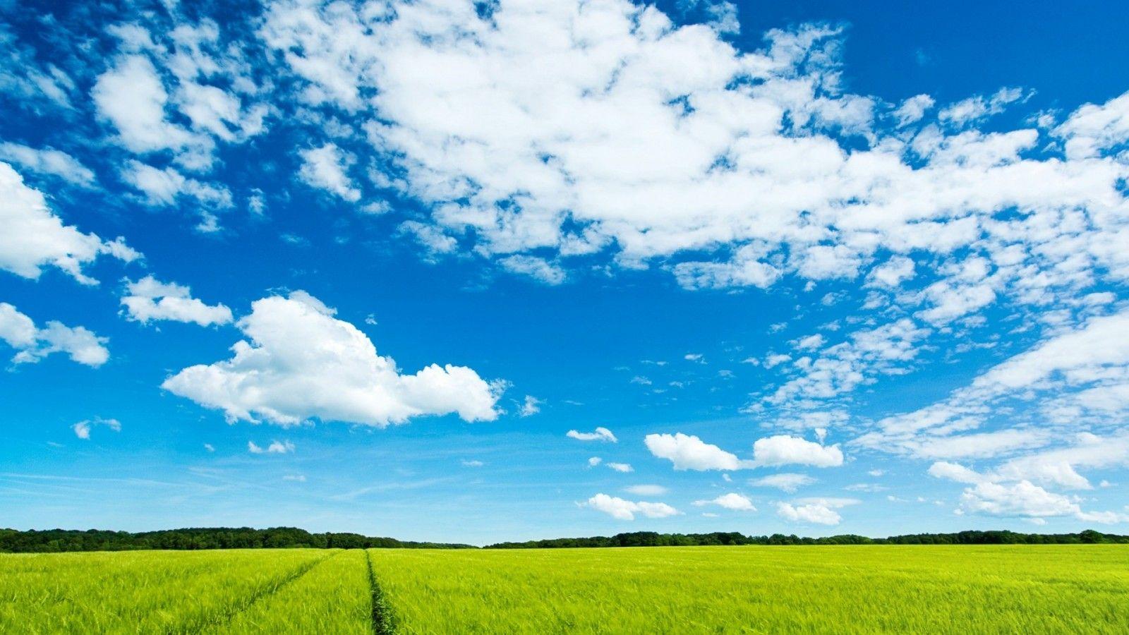 求xp经典蓝天白云草地桌面高清壁纸 1280 1024图片高清图片