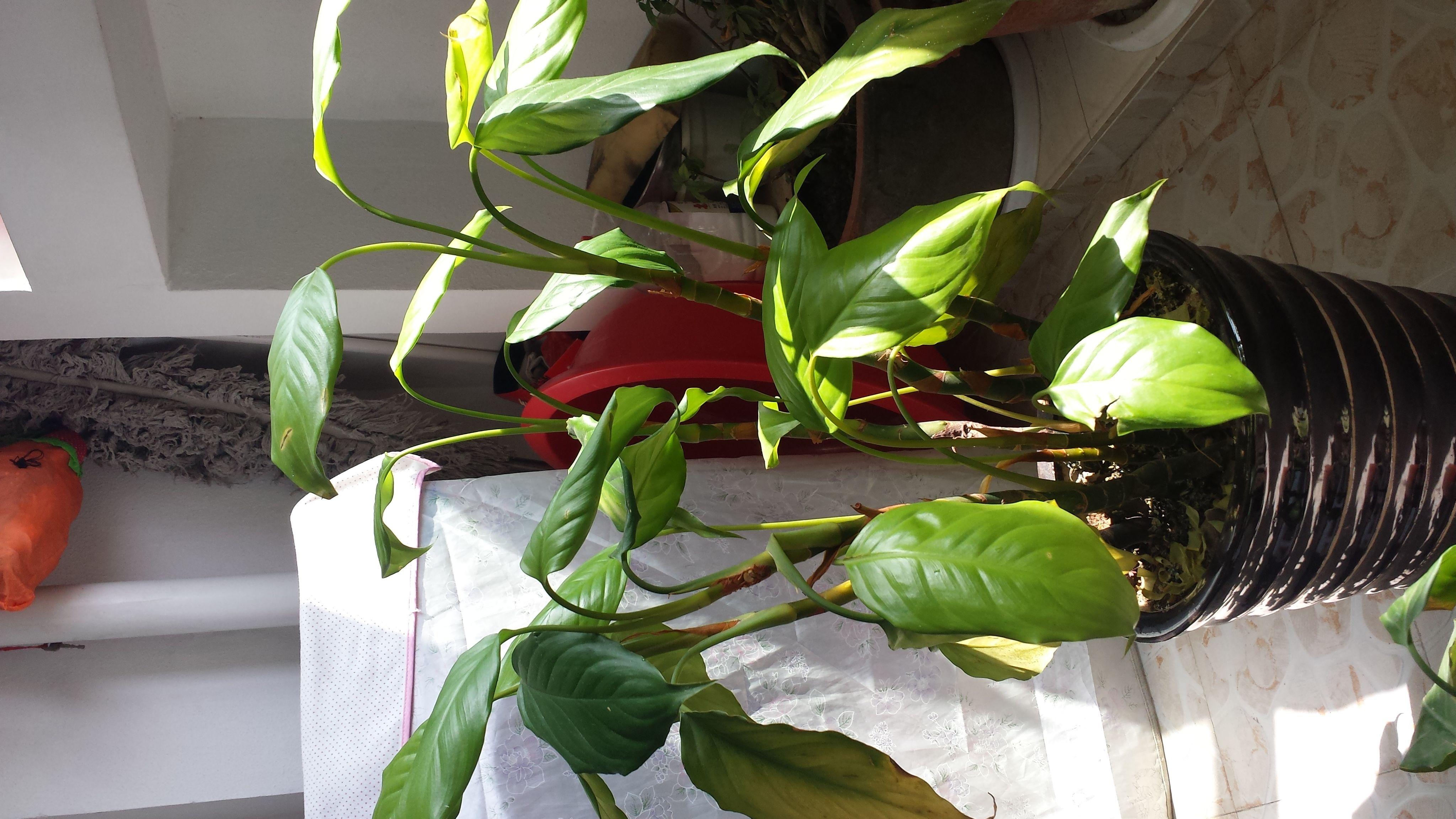 植物癹��yi)�f_植物名字