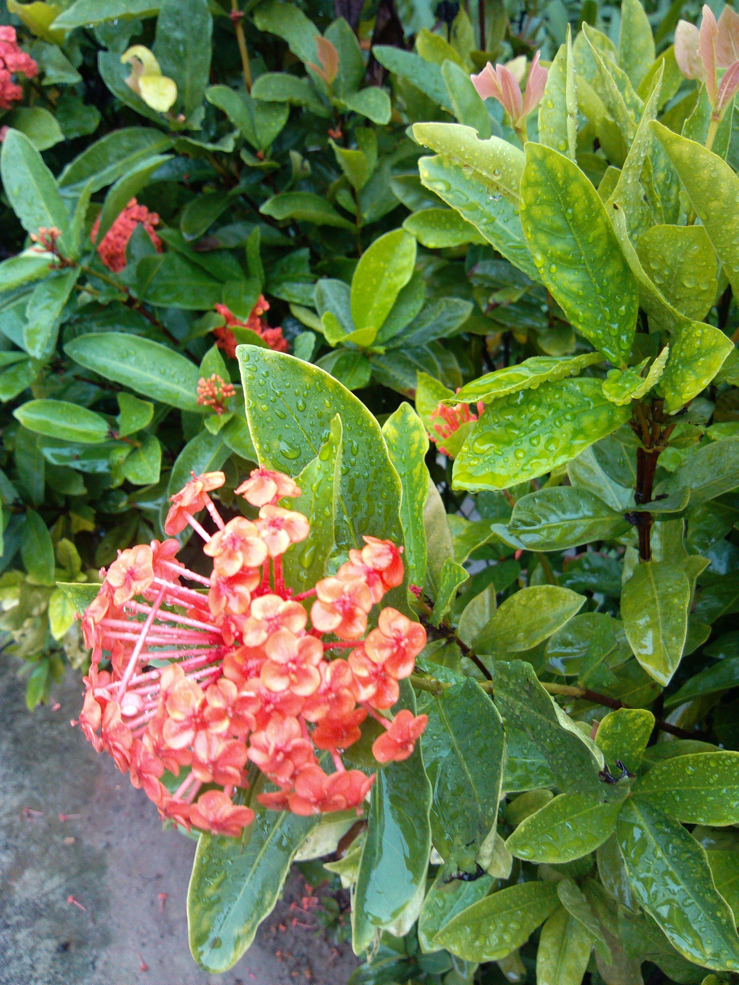 小区里常种的景观植物图片