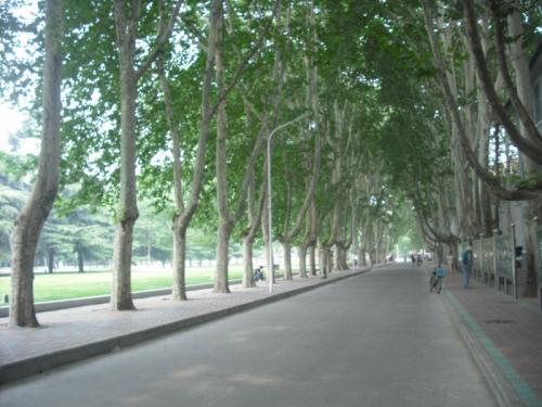 而我是在郑州大学南校区完成的我的学业.古老的校区绿化是最好的.