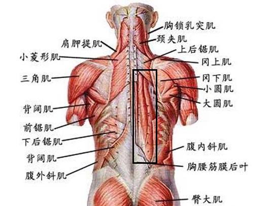 右后背酸痛是怎么回事>>肩膀-右肩膀疼痛是什么原因 右肩膀疼痛的治图片