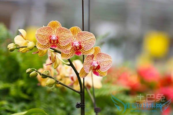 去北京世界花卉大观园