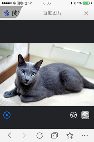 纯种俄罗斯蓝猫价格