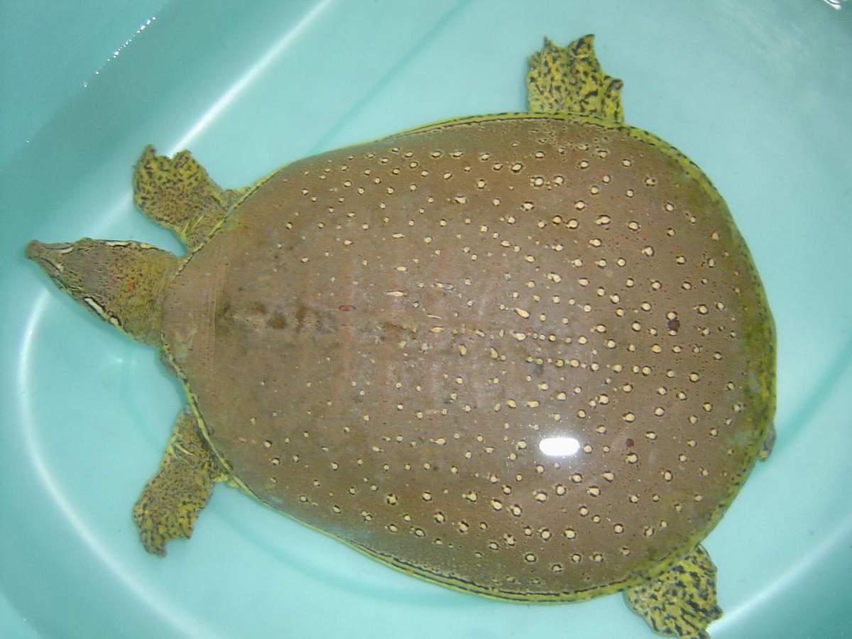 乌龟什么颜色好_这种小乌龟是什么品种?