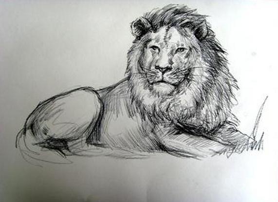 4开素描纸怎么画动物图片