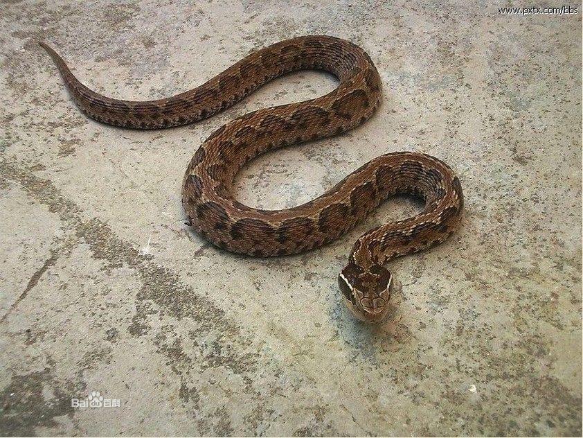 这是什么蛇?