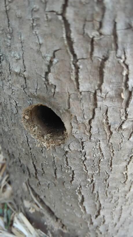 嘴巴被虫子咬肿了麻的