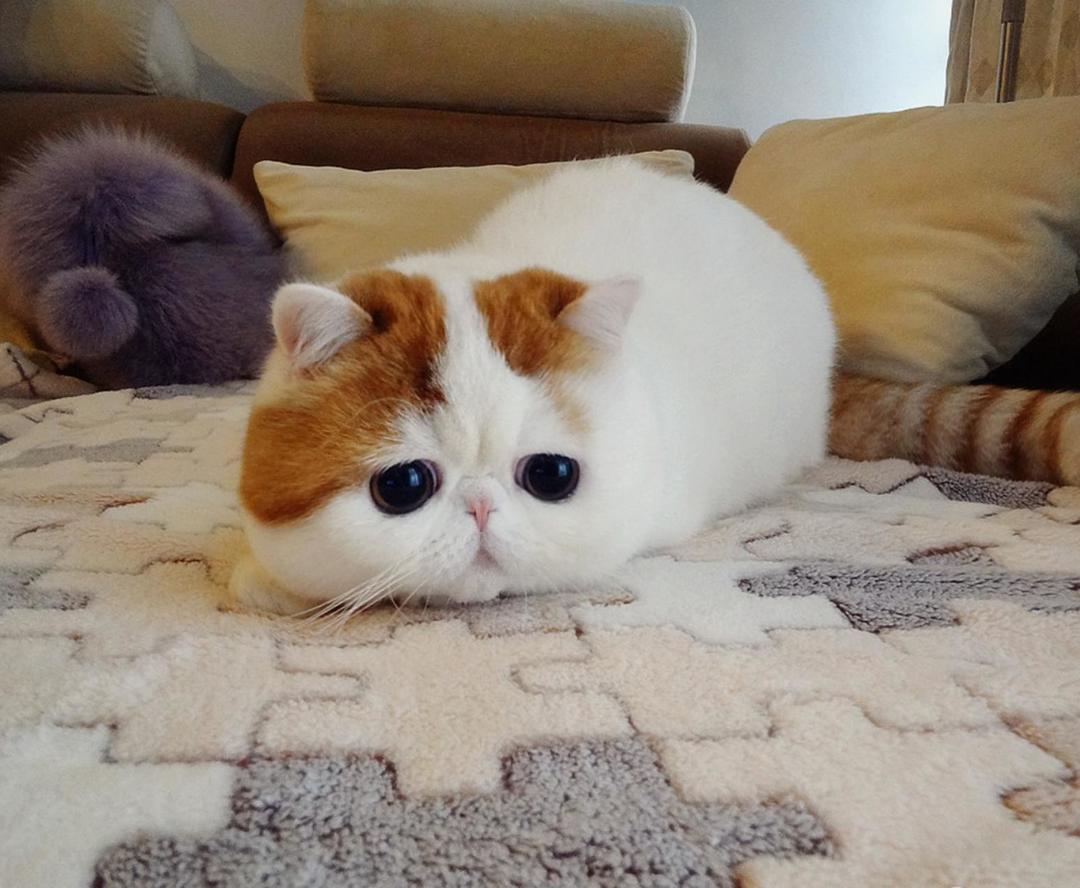 加菲猫猫小说