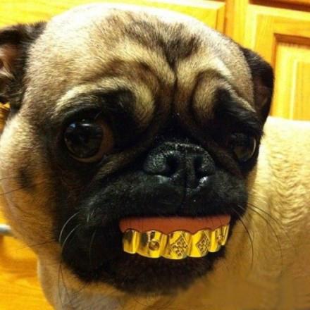 您的当前位置:笑的狗狗的图像 - 笑的狗狗的图像