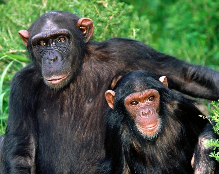 猴子和人类的关系