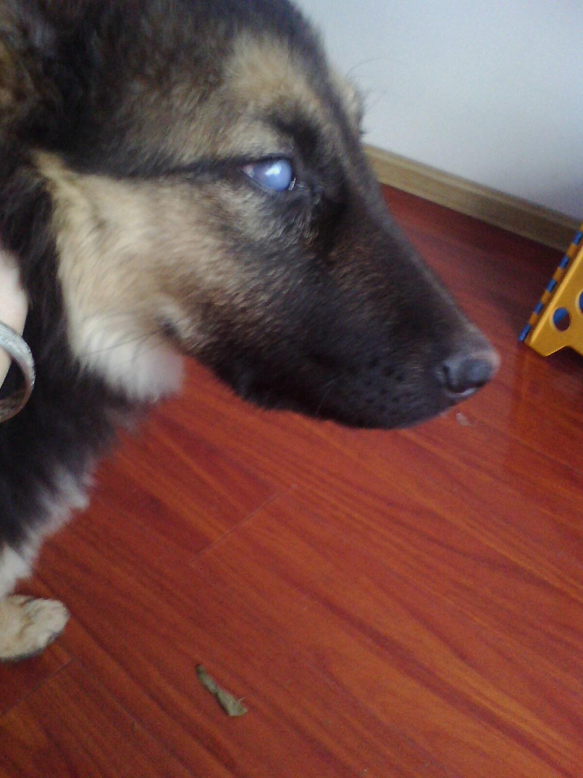 狗狗几天睁眼睛
