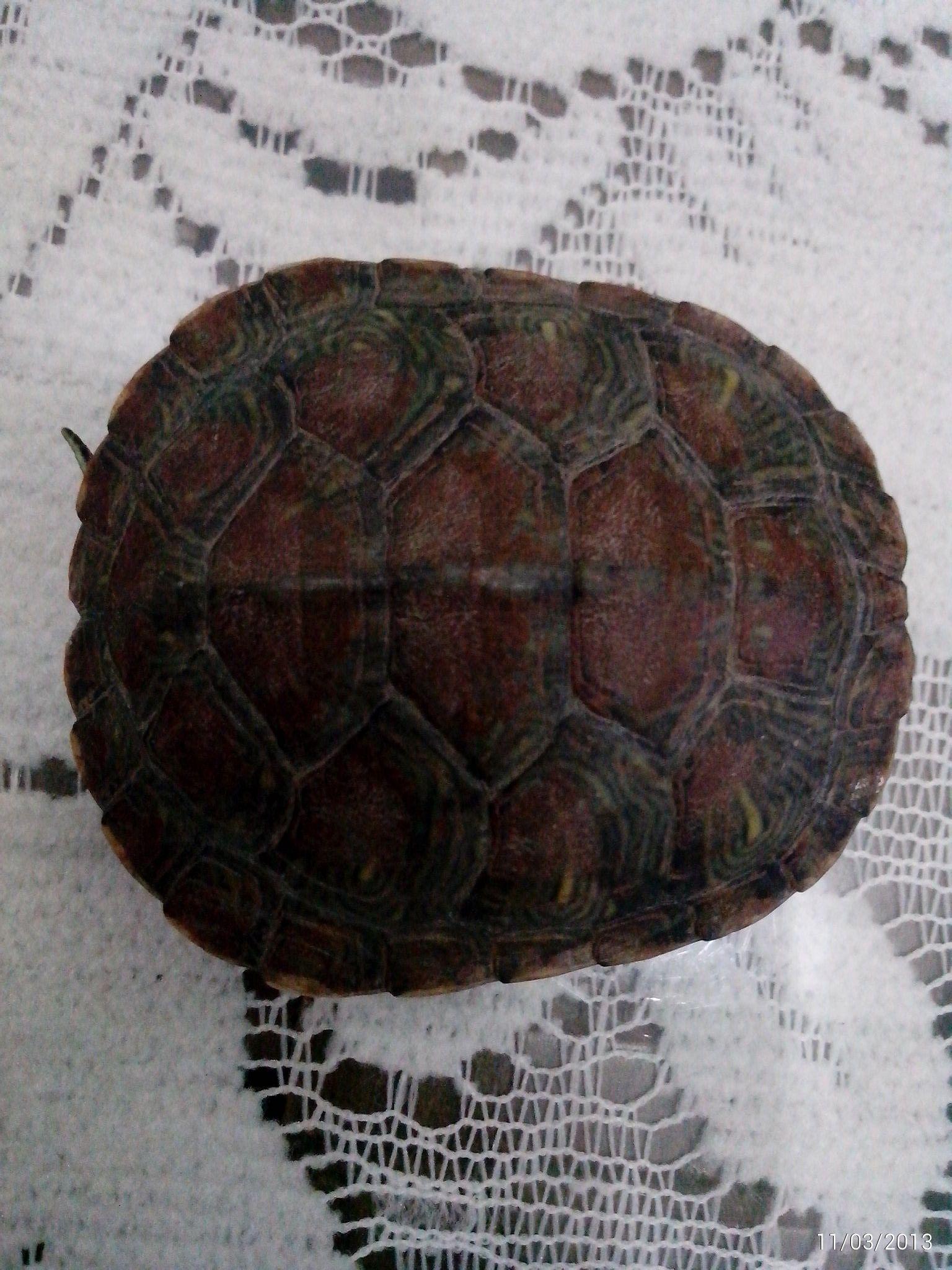 小乌龟的人工饲养方法和注意事项都有哪些?图片-乌龟的饲养方法 家