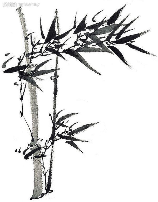 描竹子图图集 鹿晗正面素描大图 简易素描竹子的画法图片
