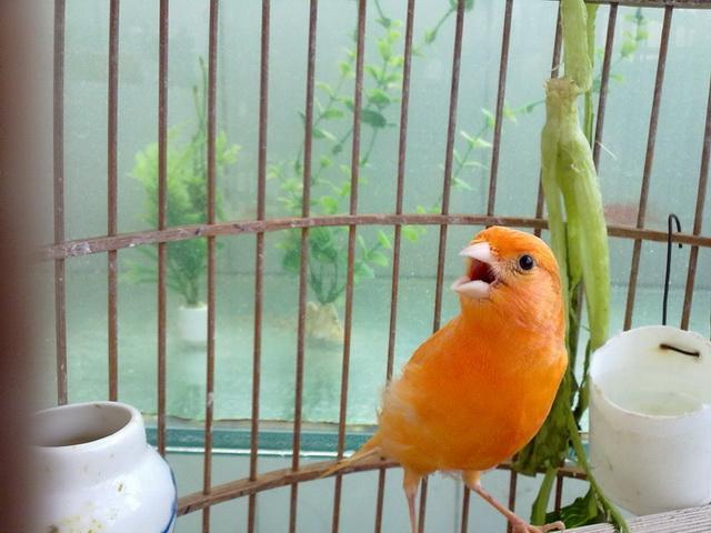 什么鸟最好养又听话?