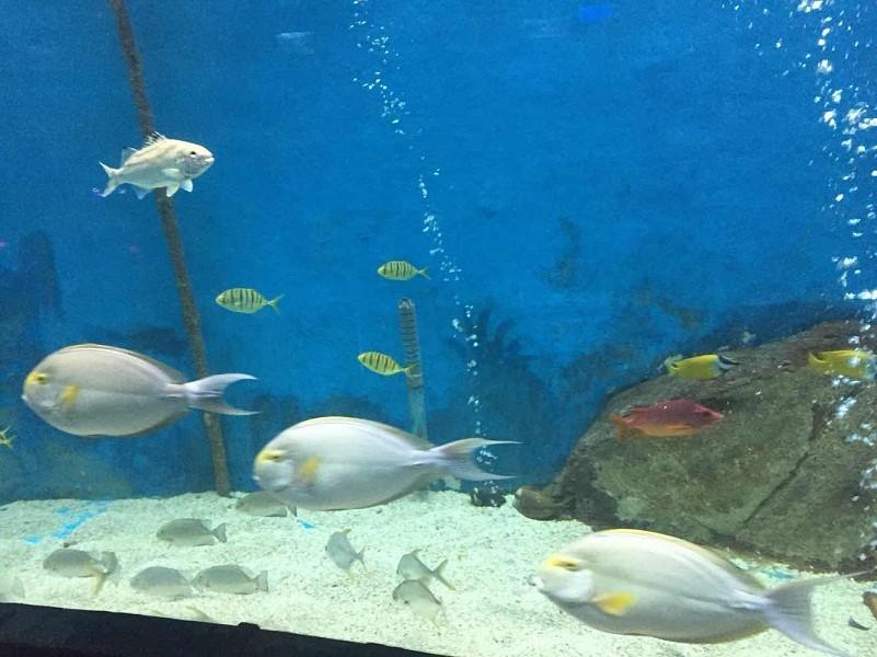 合肥有几个海洋世界