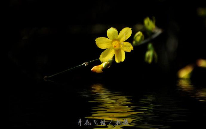 和迎春花相似的植物