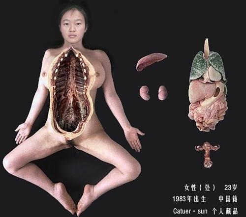 好像这个女性人体 是