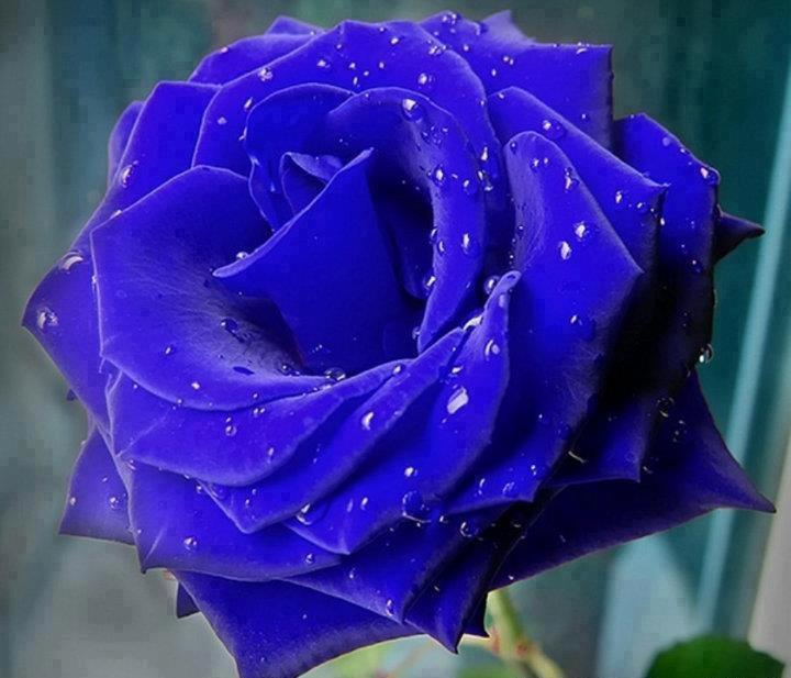 七夕,你若快乐 【优美诗文】 - 紫薇 - 紫薇博园