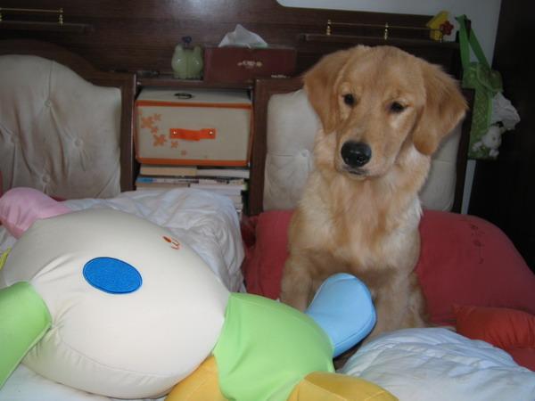 深圳养犬管理条例