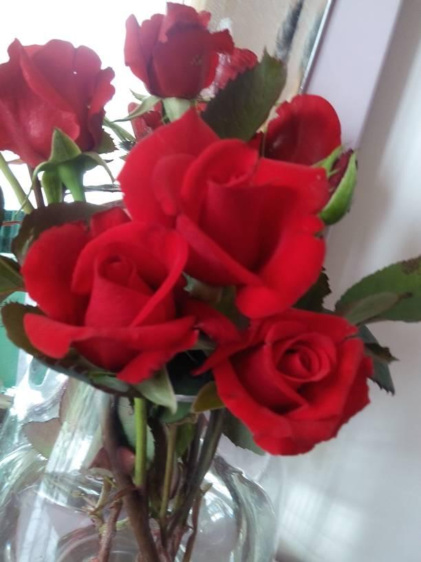 情人节你进了许多玫瑰花_表情大全图片