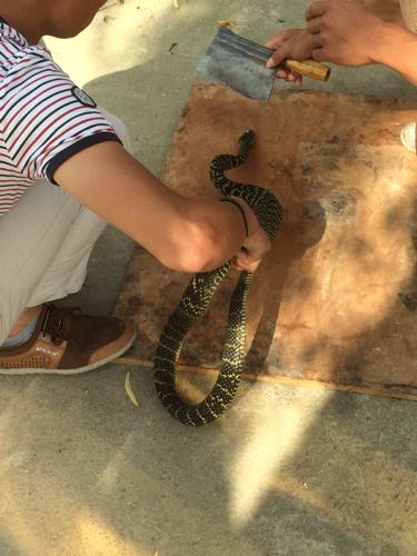 热爱橹之人与动物最新版_动物,老蛇,今天我看到有人杀蛇,请问这是什么蛇