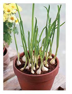 盆景 盆栽 植物 231_300