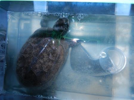 怎么分辨乌龟的种类