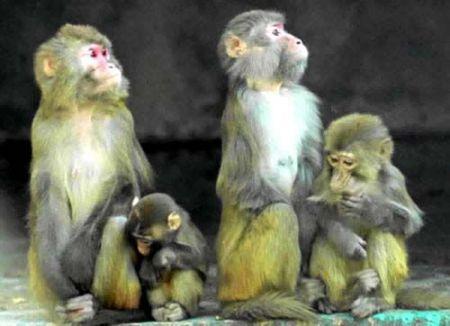 要饭的猴子_牵着猴子要饭,猜一成语
