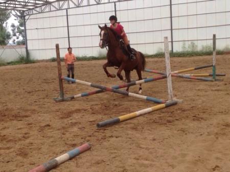 这个女孩骑的马是什么马种