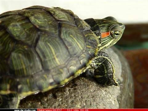 乌龟冬眠要怎么办